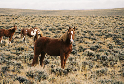 Harsh environment.  Wyoming. 2004.