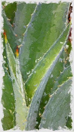 aloe_painterly