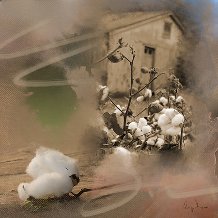 Digital Art_In the land of cotton