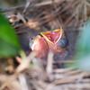 0510_Bird_003