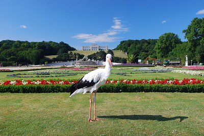 Bird pose in Schonbrunn Palace. Vienna, Austria