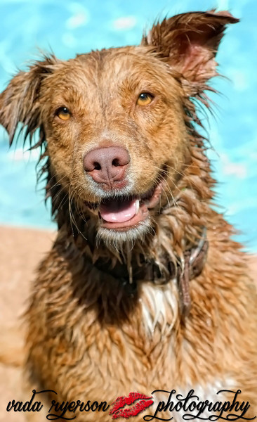 I know i've had a good photoshoot when I find myself smiling or laughing out loud while I'm editing...my client asked me to do some pet photos while I did her other shots...we had so much fun...she's got one dog that just LOVES the pool. So cute!