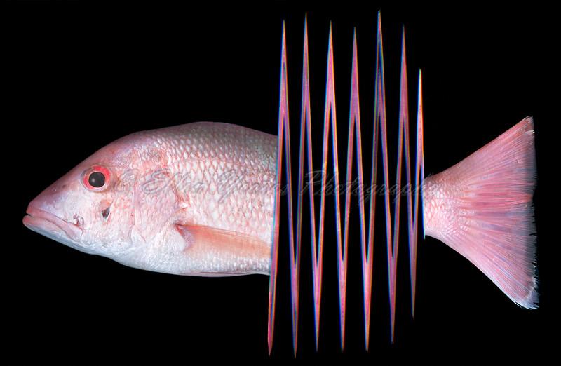 Fish Scanography