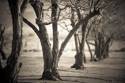 Orchard Garden