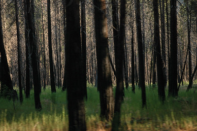 Shooting Trees
