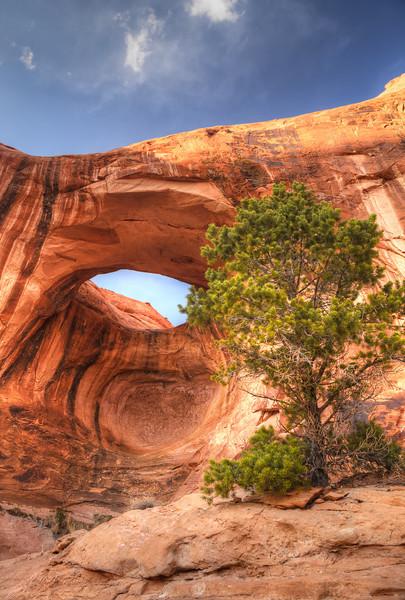Bowtie Arch