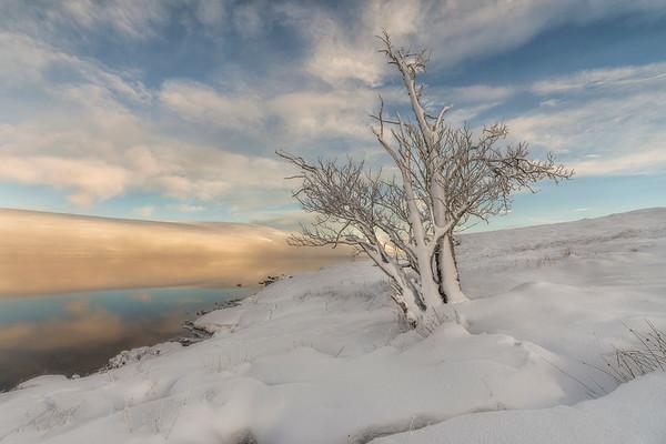 Frozen Tree, Loch Glasscarnoch, Garve, Ross-shire
