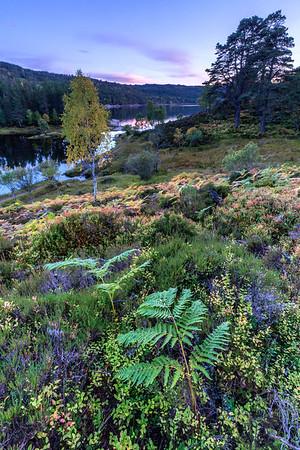 Autumn in Glen Afric, Canich, Scotland.