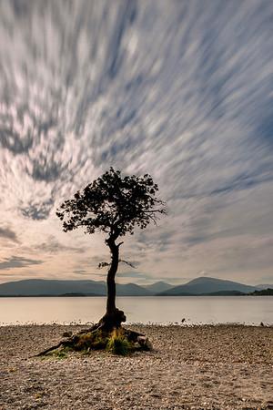 The famous wee tree at Millarochy, Balmaha, Loch Lomond.