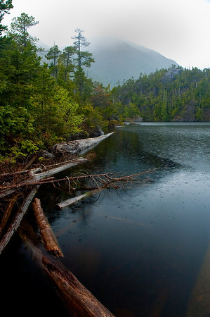 Pacific Rim National Forrest