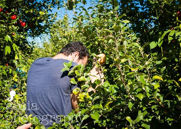 2016 09 18 All Seasons Apple Orchard-0677