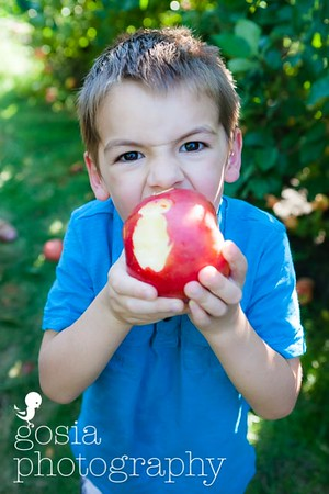 2016 09 18 All Seasons Apple Orchard-0713