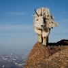 Mountain Goat Summit