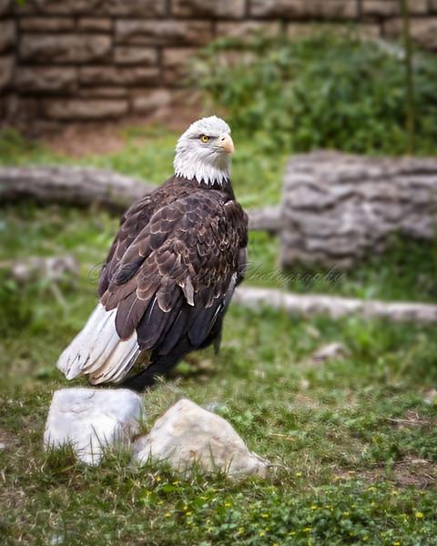 Shot from San Antonio Zoo.