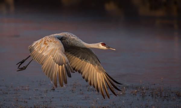 Capable Crane