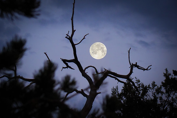Hunting moon through the woods at Grand Canyon. South Rim - Arizona, USA