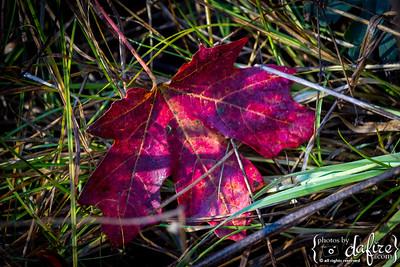 photosbydafire-2794