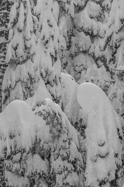 Snow build up Donner Pass