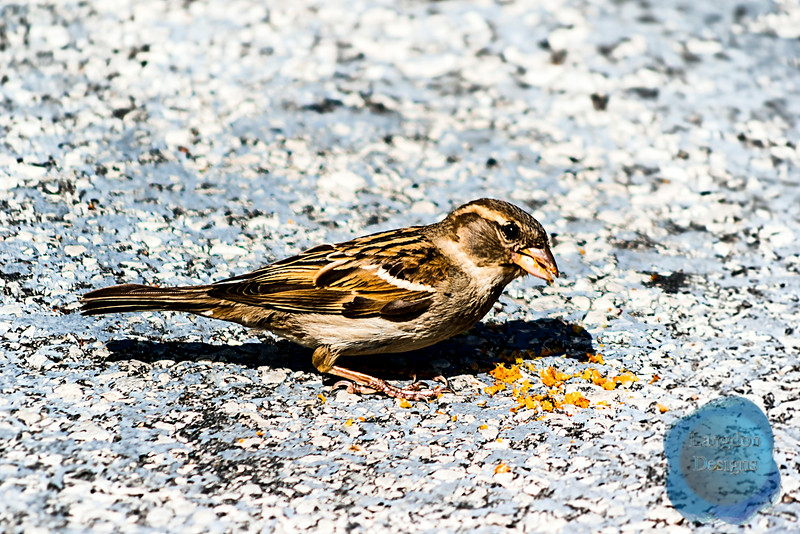 Little Brown Bird Eating
