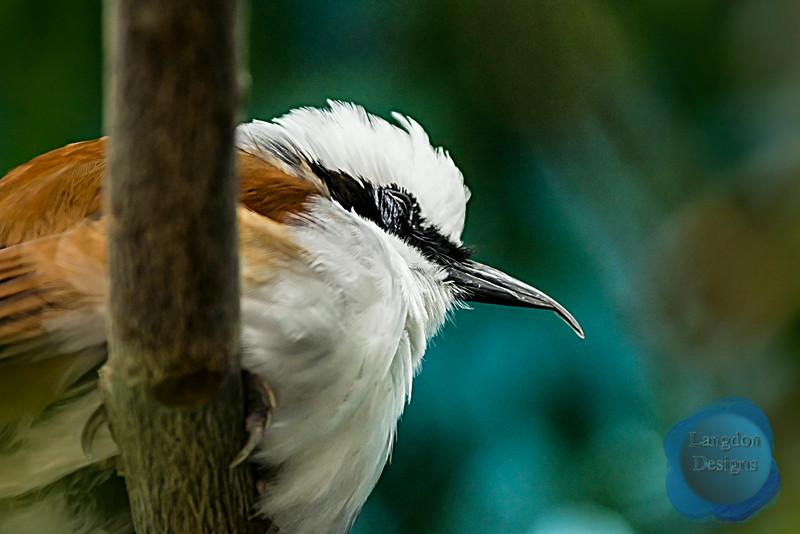 A Resting Bird