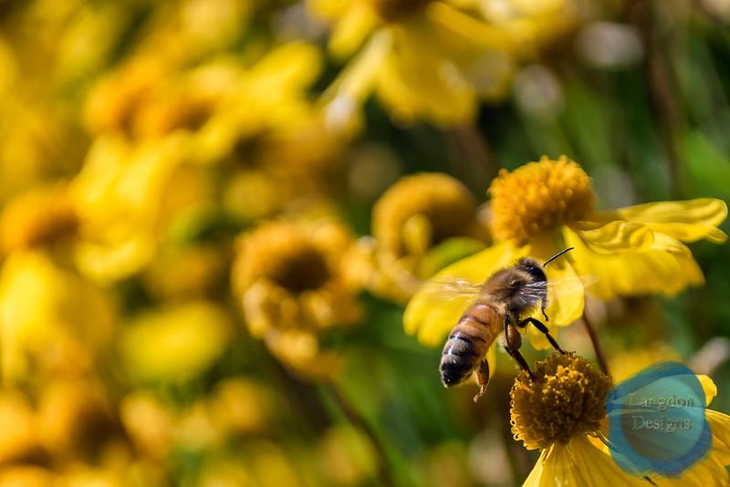 Fall Bee 2