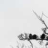 Cold Birds