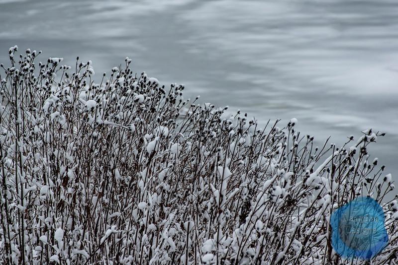 Snow Covered Wild Grass