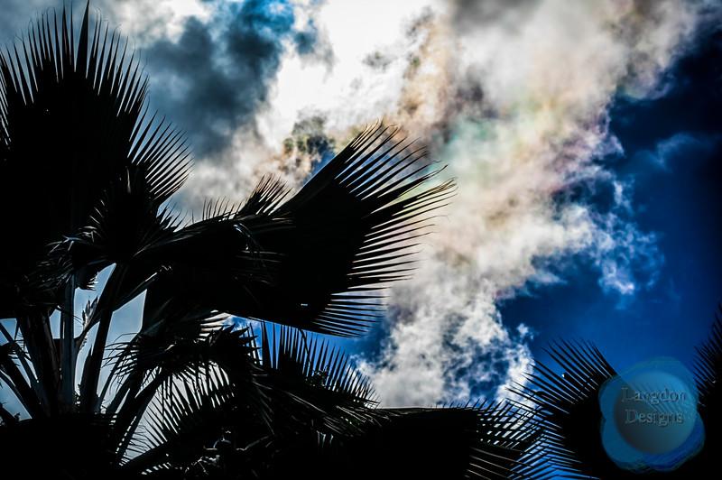 Rainbow Palms Silhouette