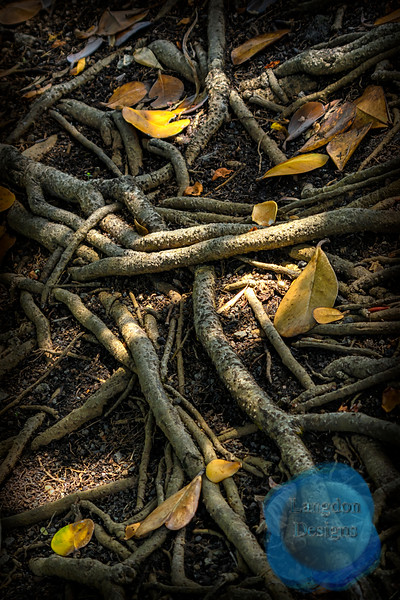 Autograph Tree Roots
