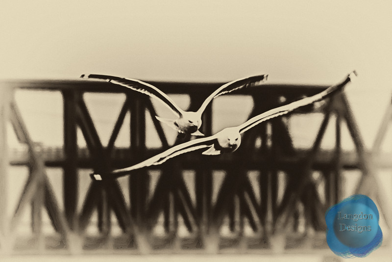 Seagulls By the Bridge Processed
