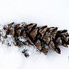 Winter Pine Cone