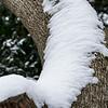Snowy Bark
