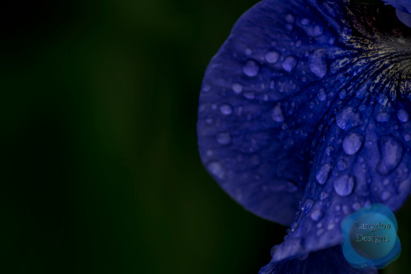 Blue Flower Petal with Raindrops