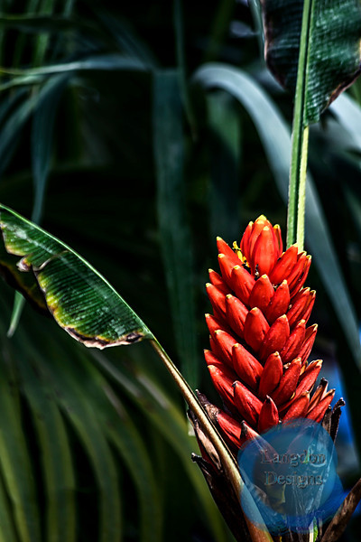 Giant Spotted Zamia Seeds