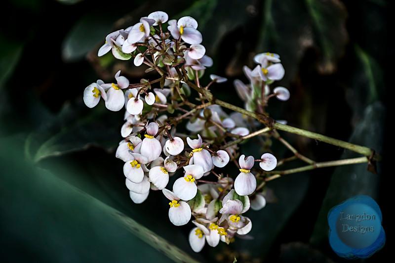 White Flowers Amongst Multiple Miggs Bromeliad