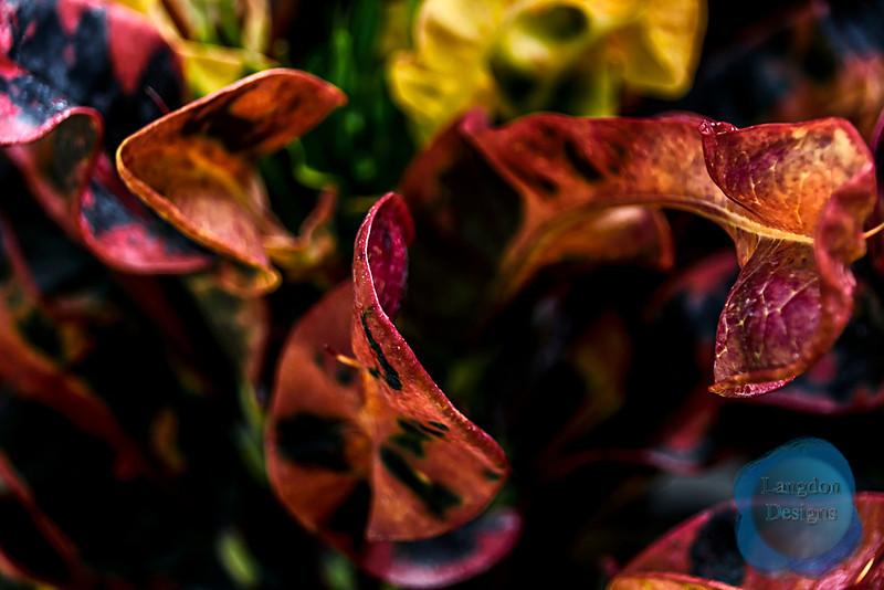 Mammie Croton