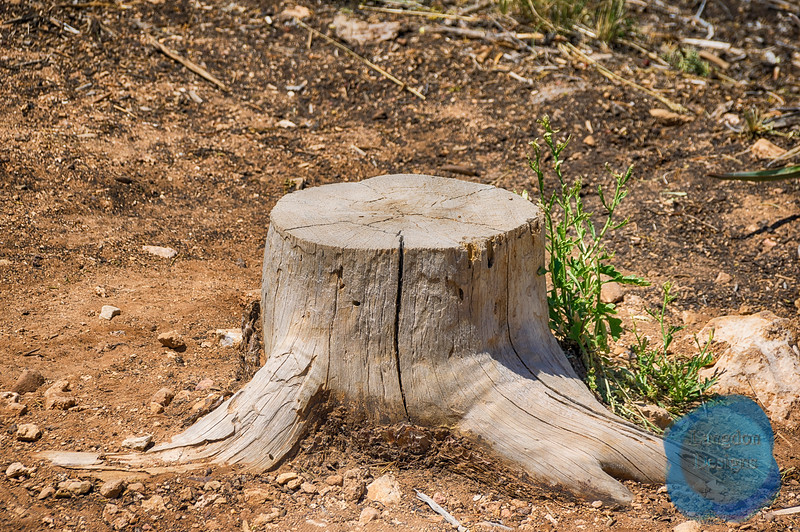 Tree Stump in the Desert
