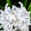 Wondrous White Flowers