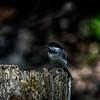 A Little Birdie