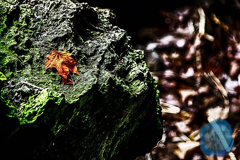 Leaf upon the Rock