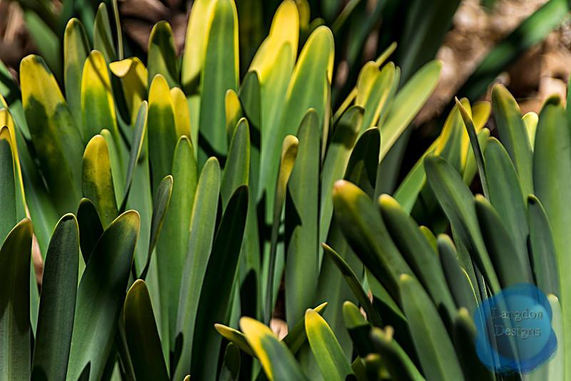 Spring Grows