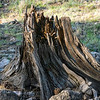 Decomposing Stump
