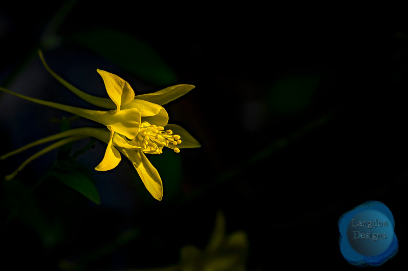 Golden Columbine Shnes