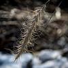 Prairie Twig