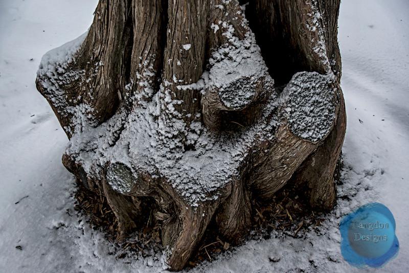 Winter Tree Stump