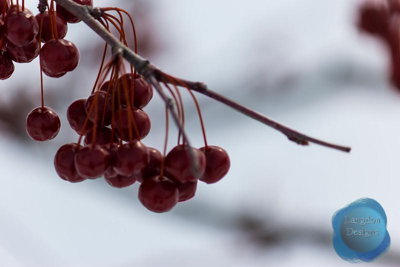 Berry 2