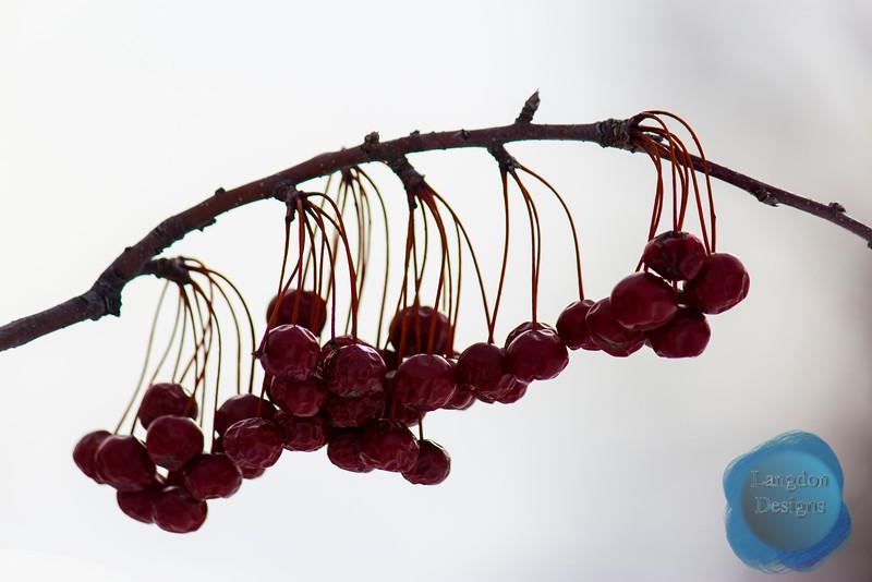 Berry 3