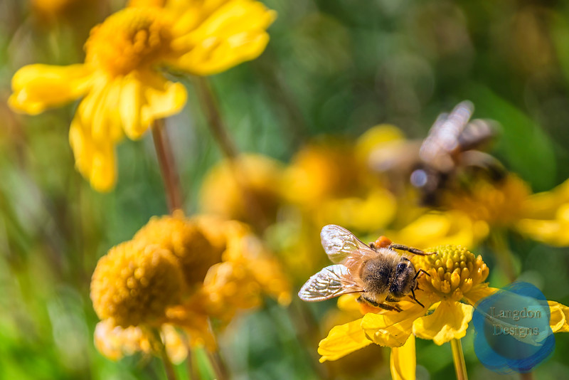 Fall Bee 3