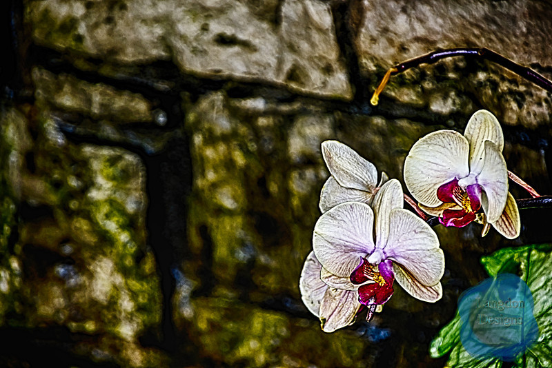 White Orchid HDR
