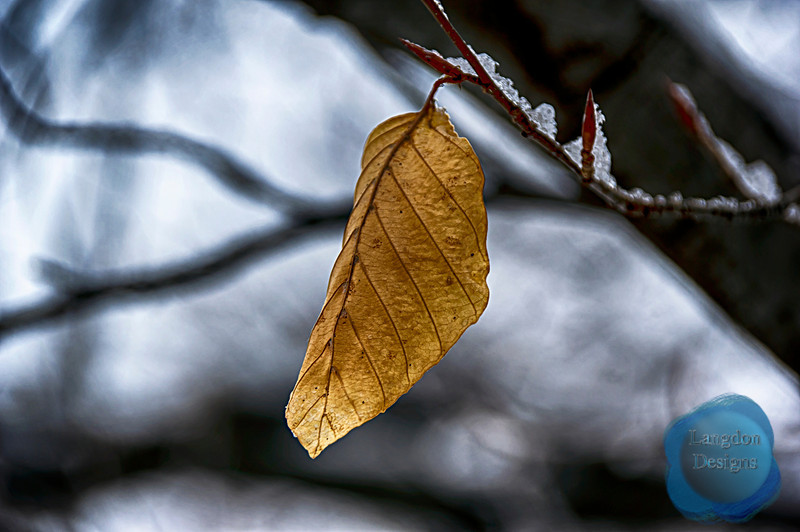 Leaf Hangs On